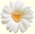 flower_heart-danilorizzuti_125